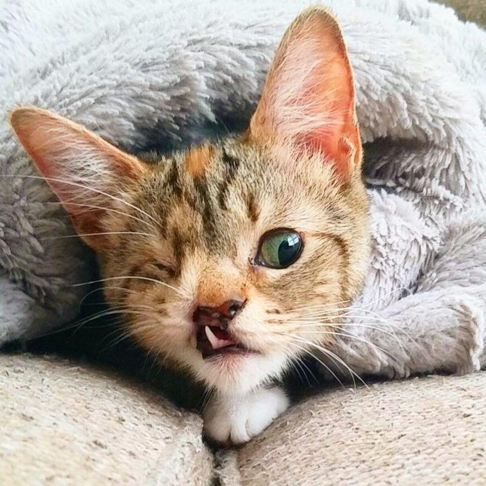 """""""Hässliche"""" Katze findet Ruhm und Liebe"""