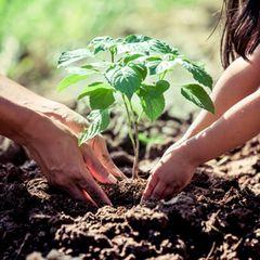 Nachhaltiger Garten: Erwachsener und Kind pflanzen einen Baum