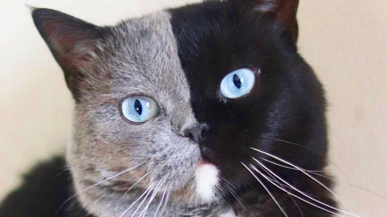 Katzen cover image