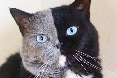 Aurora Ramazzotti: Totchter von Michelle Hunziker postet lustiges Katzenbild