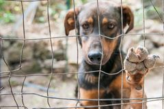 """""""Es ist wie auf Zalando"""": Immer mehr Menschen bestellen Haustiere übers Internet"""
