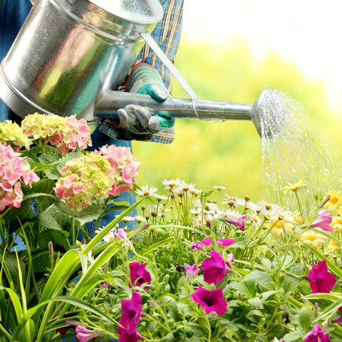 Besser Bewässern: So gießt ihr eure Blumen im Sommer richtig