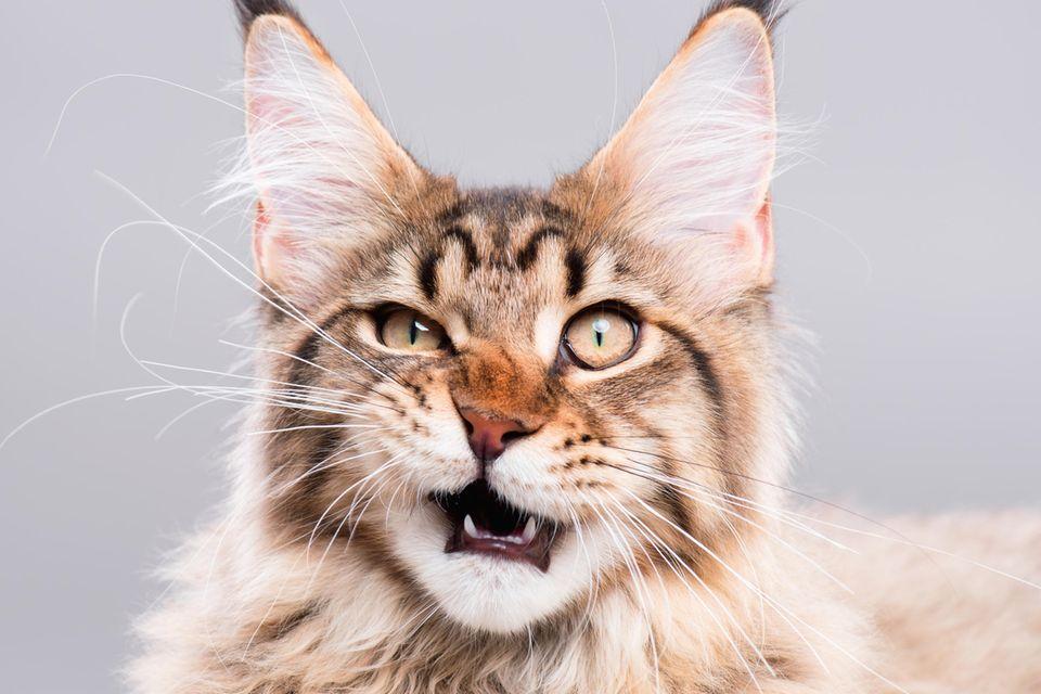 Skurrile Phobien: Katze schaut verwirrt in die Kamera