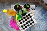 Nachhaltig leben: Gemüse anpflanzen