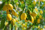 Hacks für Schwangere: Zitronenduft