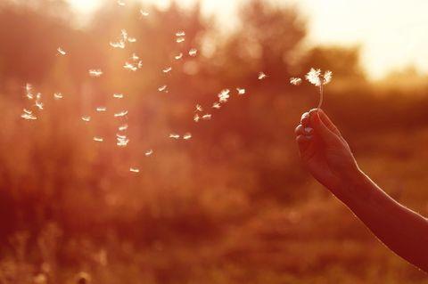 Unerfüllte Träume: Pusteblume