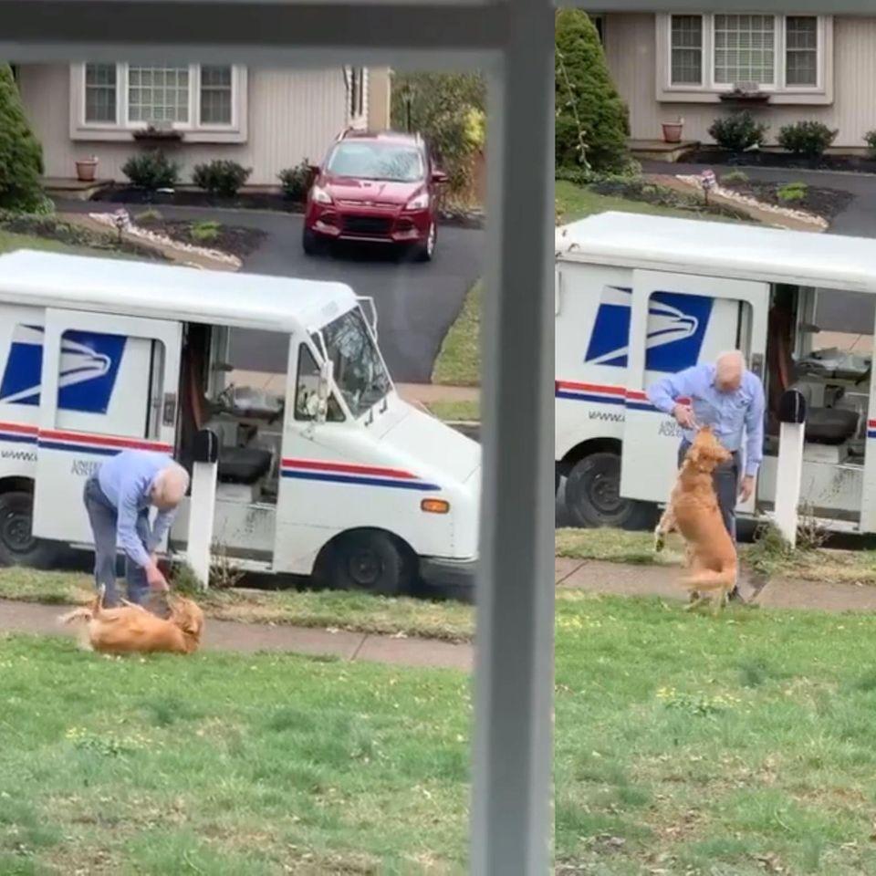 Ziemlich beste Freunde: Hund und Briefträger