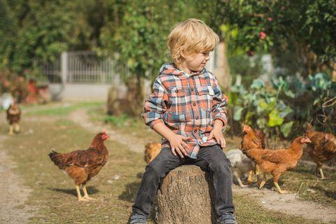 Gemeinsame Zeit: Kleiner Junge auf Bauernhof