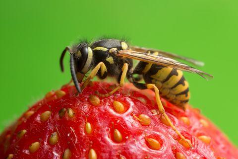 Wespen-Alarm - das solltet ihr tun