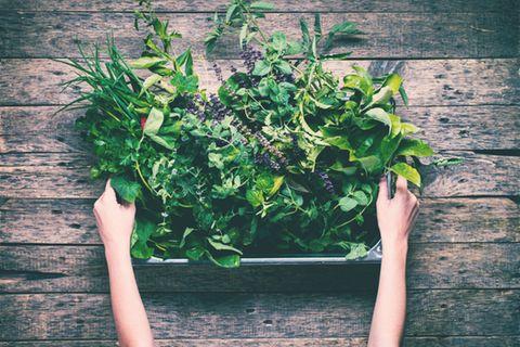 Kräutergarten anlegen: Kiste mit Kräutern