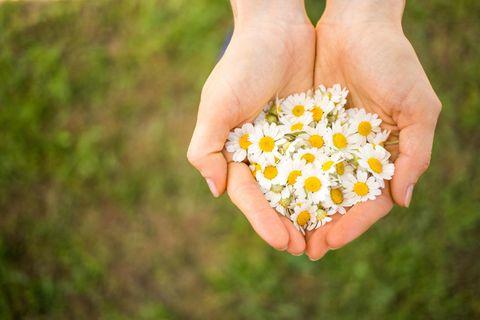 BRIGITTE-Redaktion verrät: Eine Frau hält Gänseblümchen in ihren Händen