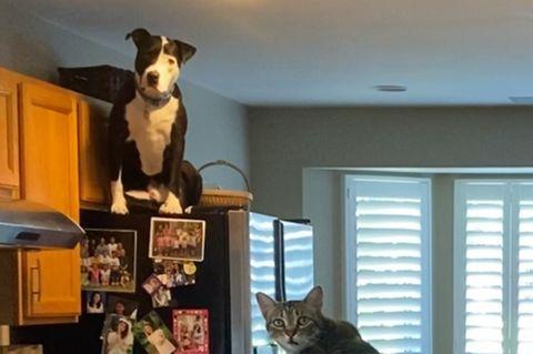 Hund hält sich für Katze