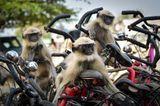 Comedy Wildlife Awards 2020: Affen auf Fahrrädern