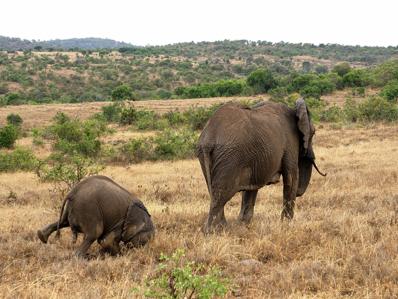 Comedy Wildlife Photo Awards 2020: Elefanten