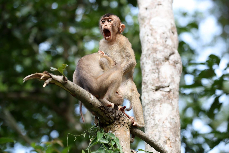 Comedy Wildlife Awards 2020: Affen auf Baum