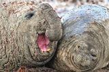 Comedy Wildlife Awards 2020: Seeelefanten