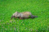 Comedy Wildlife Awards 2020: Elefanten