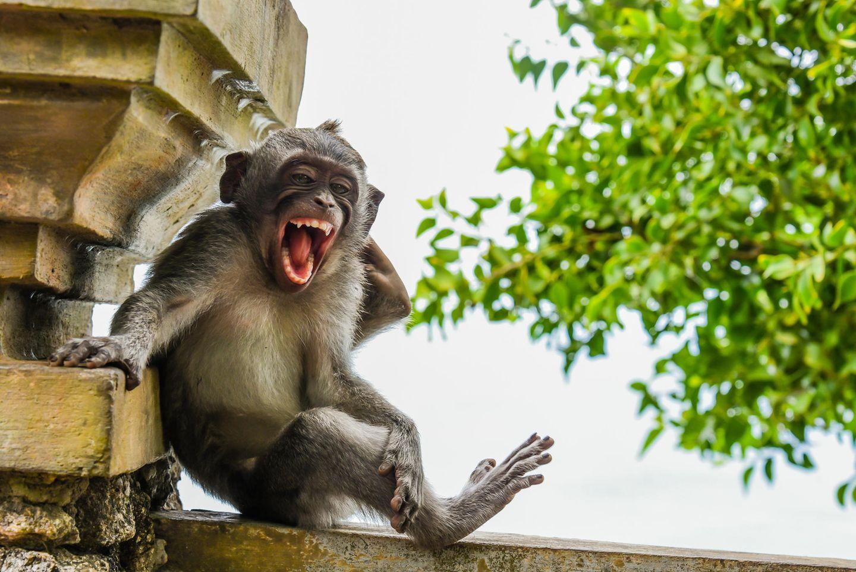 Comedy Wildlife Awards 2020: Makake