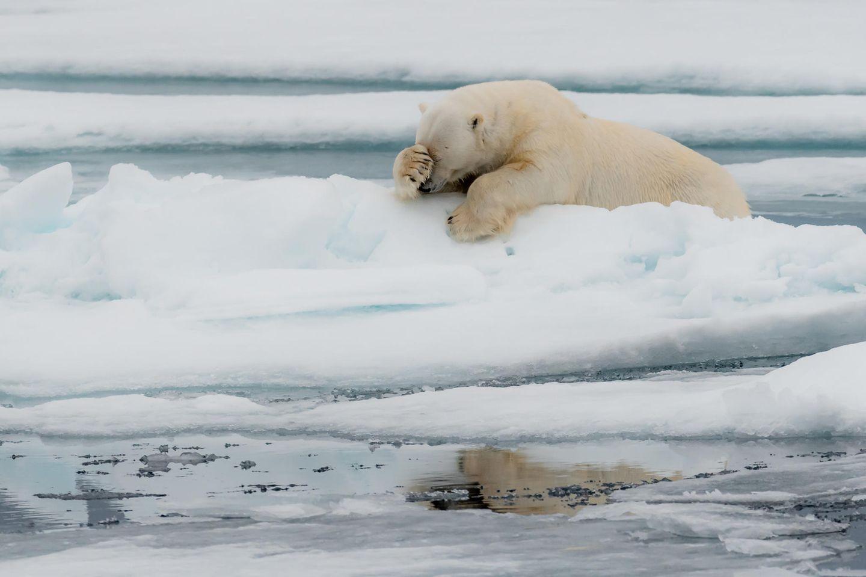 Comedy Wildlife Awards 2020: Eisbär
