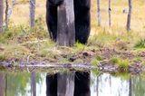 Comedy Wildlife Awards 2020: Bär