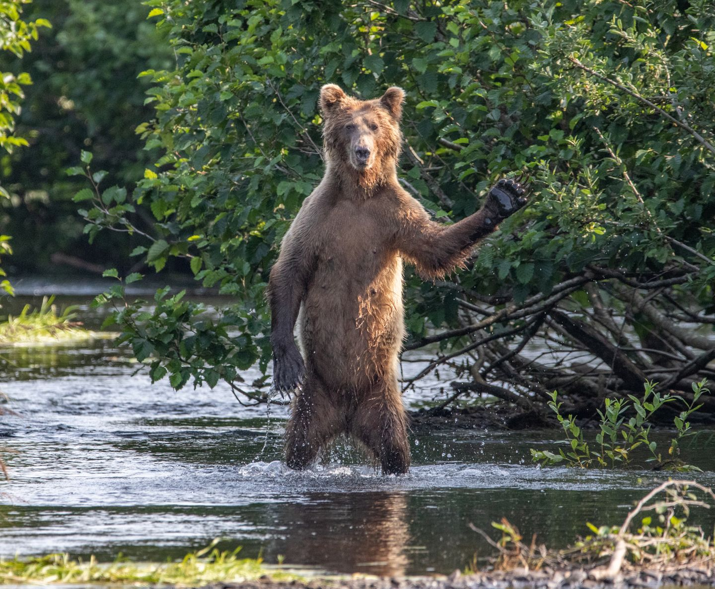 Comedy Wildlife Awards 2020: Bär