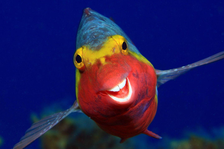 Comedy Wildlife Awards 2020: Fisch