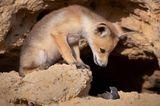 Comedy Wildlife Awards 2020: Fuchs und Maus