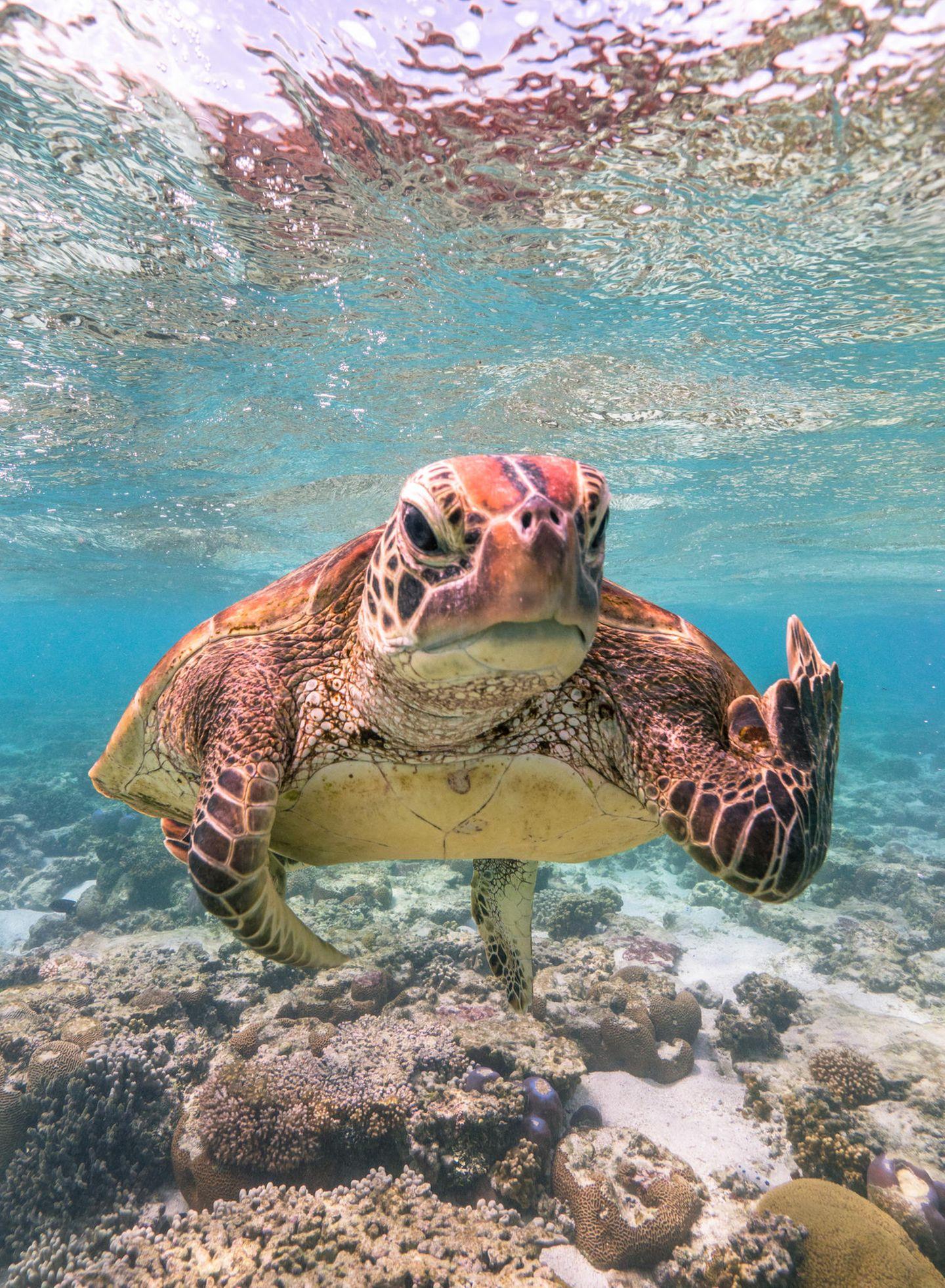 Comedy Wildlife Awards 2020: Schildkröte