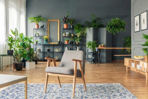 Wohnung gemütlich einrichten: Pflanzen im Wohnzimmer