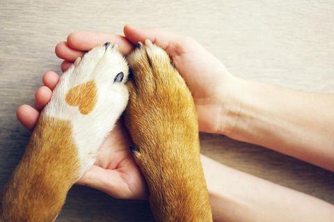 Hundepfoten auf Menschenhand