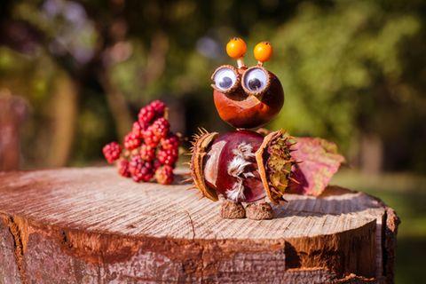 Kastanienfigur Käfer