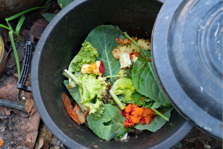 Pflücken, containern, sharen: Essen im Müll