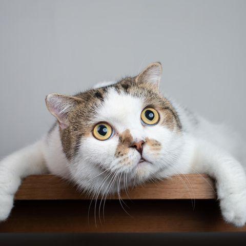 Diese Katze ist schockiert, wie leicht sie zu durchschauen war