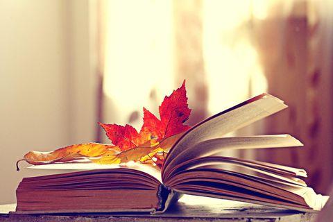 getrocknete Blätter im Buch