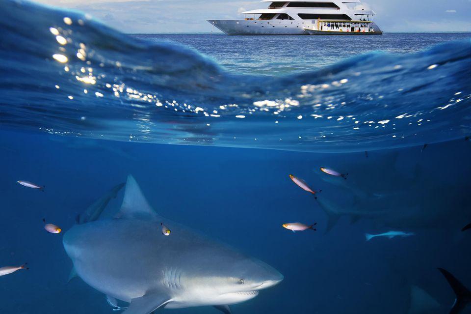 Hai-Angriff: Hai schwimmt unter Boot