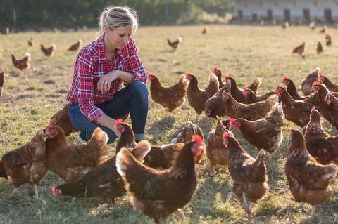Hühner halten: Frau füttert Hühner