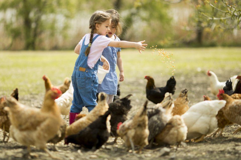 Hühner halten: Zwei Kinder füttern Hühner