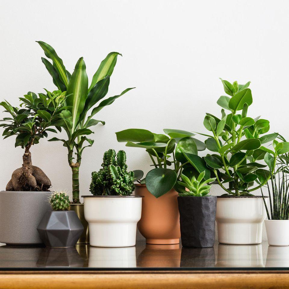 Pflanzensammlung