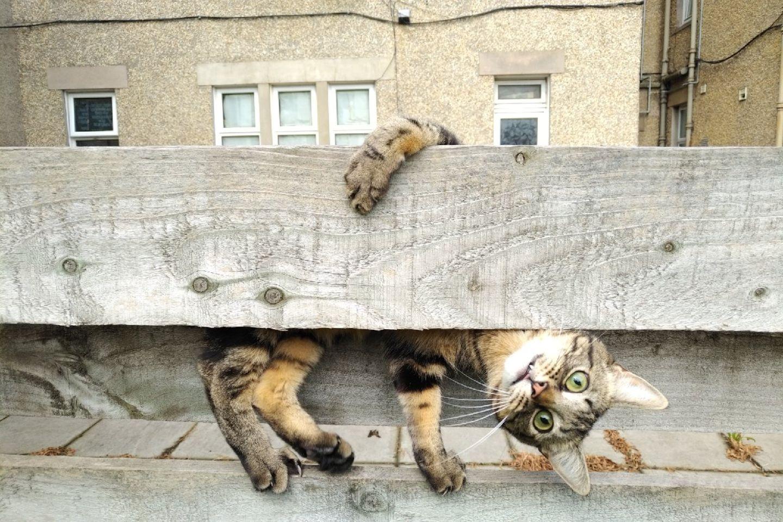 Haustier Fotowettbewerb: Katze am Zaun
