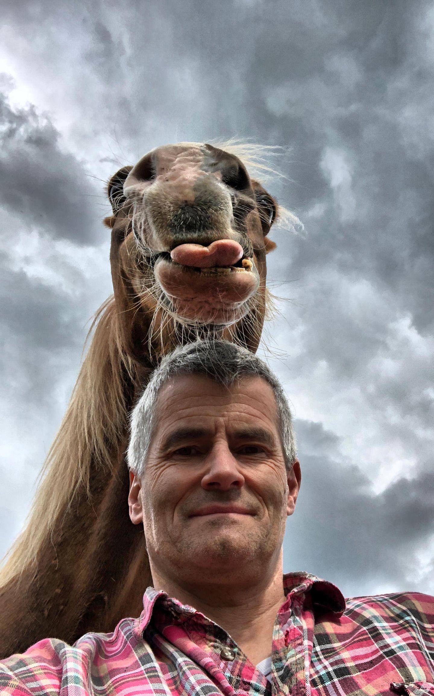 Haustier Fotowettbewerb: Pferd streckt Zunge raus