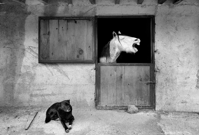 Haustier Fotowettbewerb: Pferd im Stall mit Hund