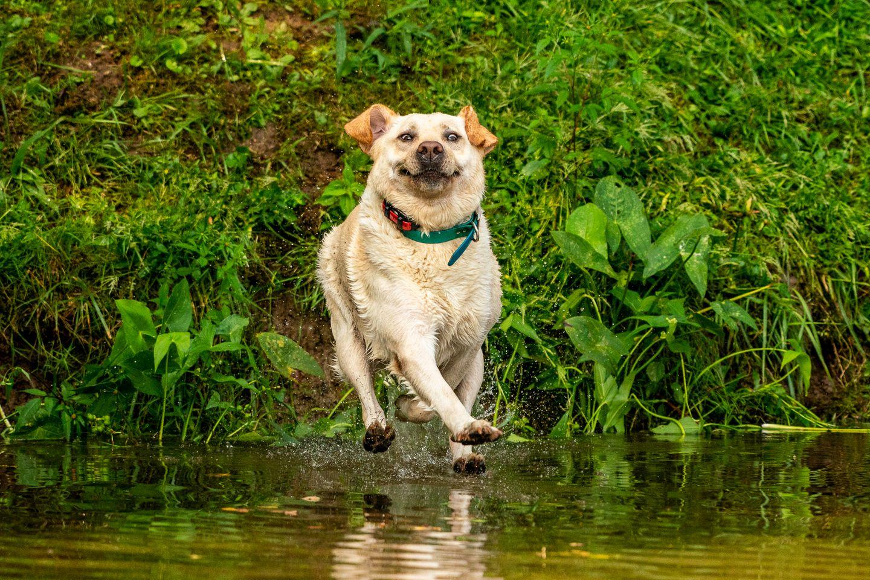 Haustier Fotowettbewerb: Hund am Wasser