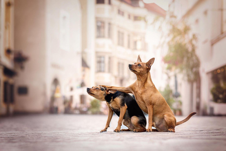 Haustier Fotowettbewerb: Zwei Hunde