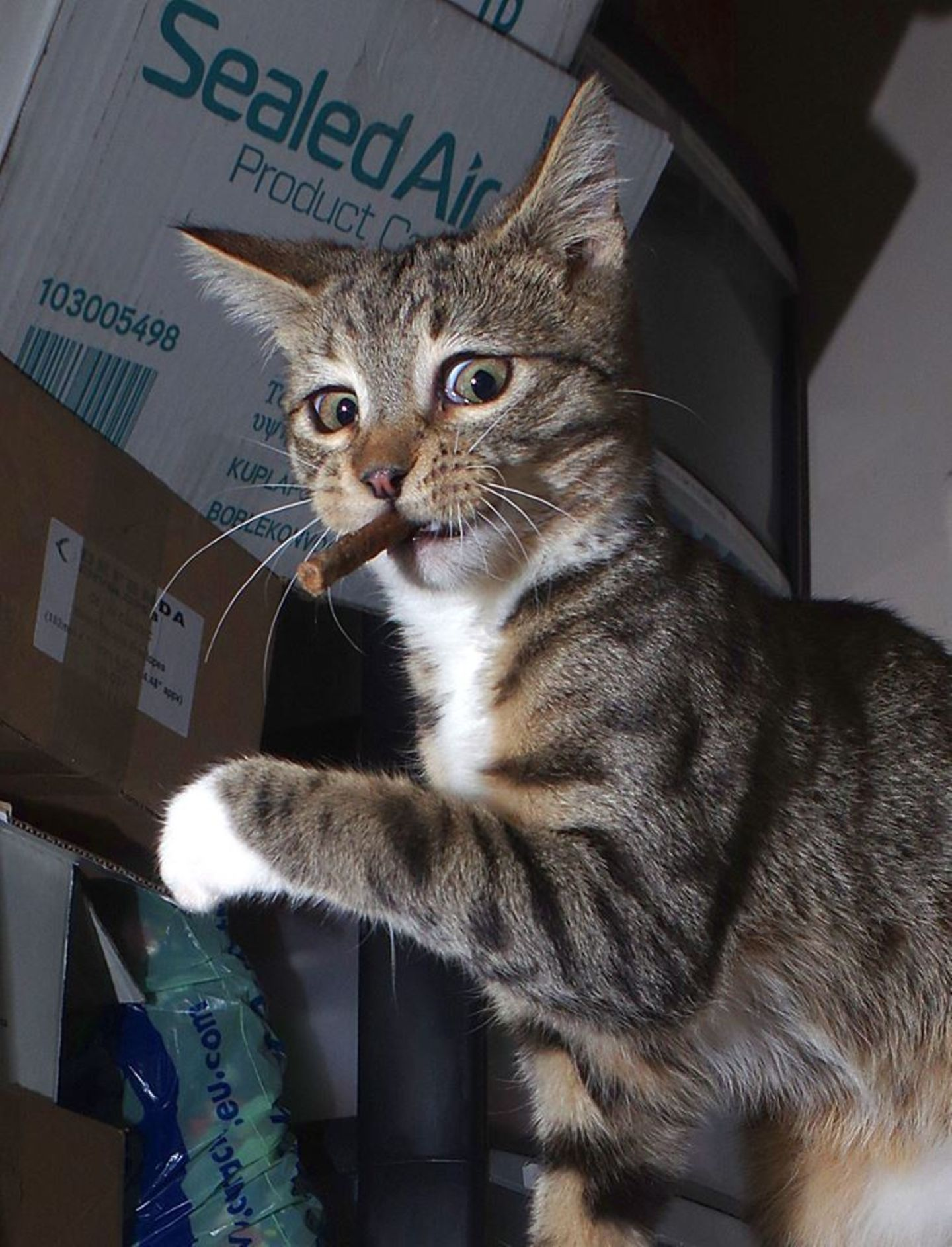Haustier Fotowettbewerb: Katze mit Knabberstange