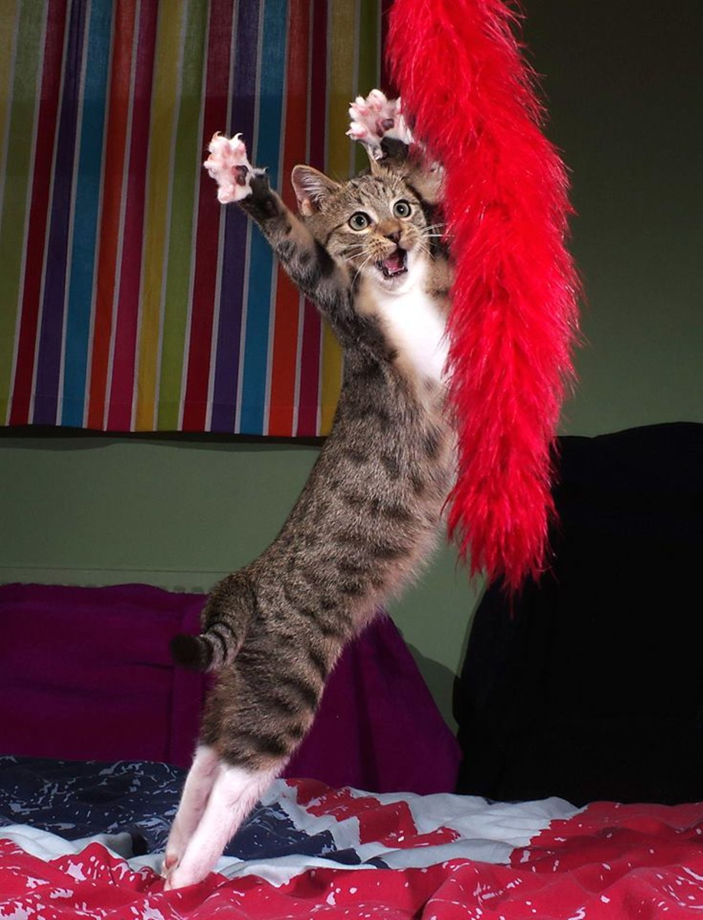 Haustier Fotowettbewerb: Katze springt