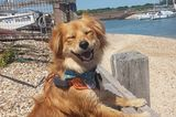 Haustier Fotowettbewerb: Hund am Zaun