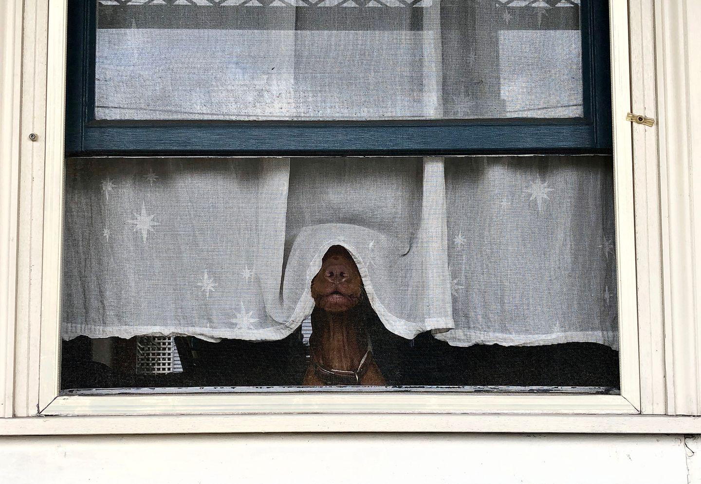 Haustier Fotowettbewerb: Hund am Fenster