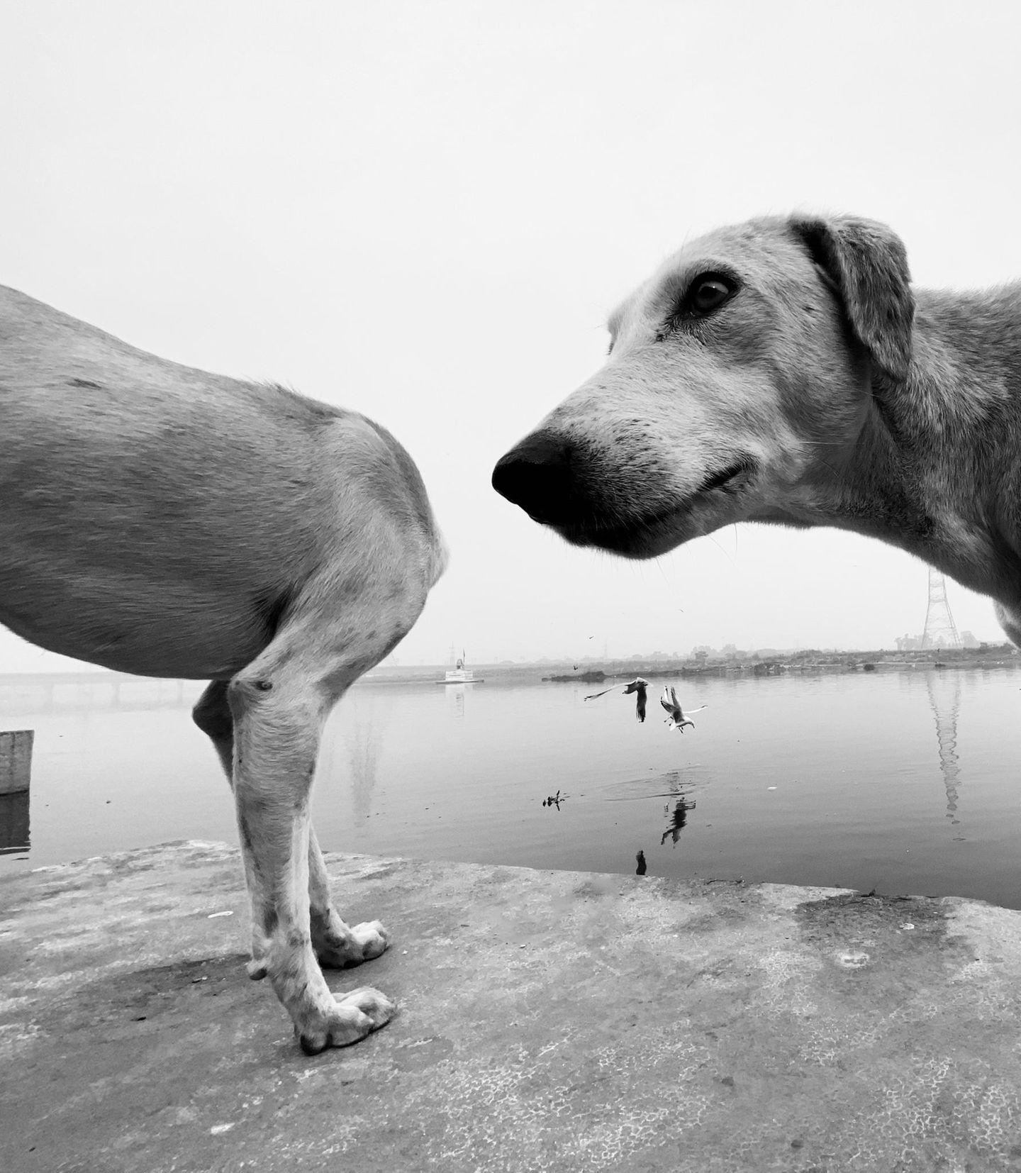 Haustier Fotowettbewerb: Hunde am See