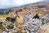 Haustier Fotowettbewerb: Esel auf der Weide