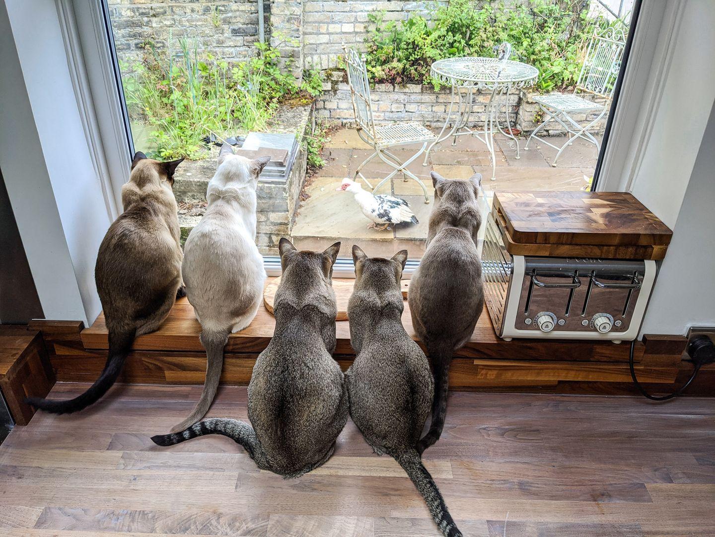 Haustier Fotowettbewerb: Katzen vorm Fenster